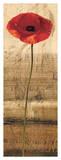 Poppy Panel II Giclee Print by Andrea Kahn