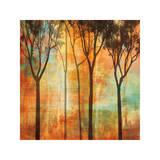 Magical Forest II Reproduction procédé giclée par Chris Donovan