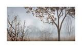 Early Morning Mist II Impressão giclée por John Seba