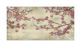 Kirsebærtræer i flor Giclée-tryk af John Seba