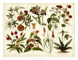 Tropical Botany Chart II Giclee Print by  Meyers