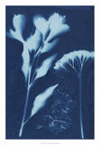 Cyanotype No.15 Giclee Print by Jenna Guthrie