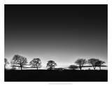 Treeline Light Giclee Print by Martin Henson