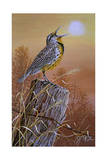 Meadowlark Painting Reproduction procédé giclée par Jeff Tift