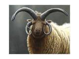 Loaghtan Ram Lámina giclée por Jeremy Paul