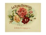La Rosa Giclee Print