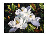 Magnolia Trio Giclee Print by Laurin McCracken