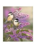 Lilacs and Chickadees Reproduction procédé giclée par William Vanderdasson