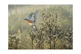 October Meadow Giclée-tryk af Wilhelm Goebel