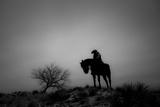 Silence Fotografie-Druck von Dan Ballard