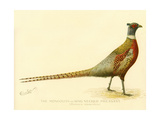 The Mongolian or Ring-Necked Pheasant Reproduction procédé giclée