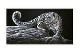Snow Leopard Giclée-tryk af Jeremy Paul