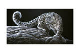 Snow Leopard Giclee Print by Jeremy Paul