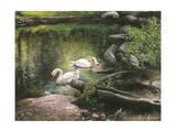 Swan Song Reproduction procédé giclée par Kevin Dodds