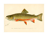 The Brook Trout Giclée-tryk