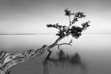 Water Tree IX Fotografisk trykk av Moises Levy