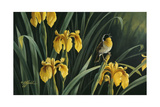 Yellow Flags and Yellowthroat Reproduction procédé giclée par Wilhelm Goebel