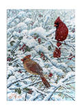 Winter Cardinal Painting Reproduction procédé giclée par Jeff Tift