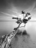 Water Tree V Fotoprint van Moises Levy