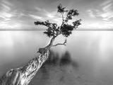 Water Tree XIII Premium-Fotodruck von Moises Levy