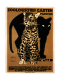 zoo big cats Giclée-tryk