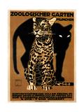 zoo big cats Giclee Print
