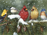 Backyard Birds on Snowy Branch Reproduction procédé giclée par William Vanderdasson