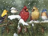 Backyard Birds on Snowy Branch Giclée-tryk af William Vanderdasson