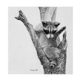 Bandit Giclee-trykk av Rusty Frentner