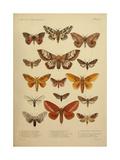 American Lepidoptera, Plate 3 Lámina giclée
