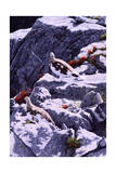 White-Tailed Ptarmigan Reproduction procédé giclée par Jeff Tift