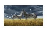 Coming of Rain Zebra Giclee Print by Jeremy Paul