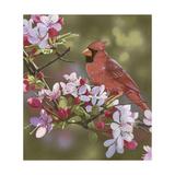 Cardinal with Apple Blossoms Reproduction procédé giclée par William Vanderdasson