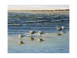 Cape May Herring Gulls Reproduction procédé giclée par Bruce Dumas