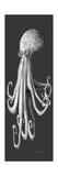Gray on Gray Octopus 1 Impressão giclée por Megan Aroon Duncanson