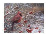 Cardinal and Berries Reproduction procédé giclée par Kevin Dodds