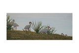Ibis Outing Reproduction procédé giclée par Bruce Dumas