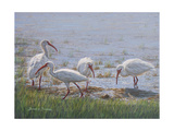Ibis Excursion Reproduction procédé giclée par Bruce Dumas