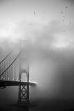 Golden Gate and Birds Photographic Print by Moises Levy