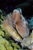 Day Octopus Fotoprint van Hal Beral