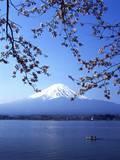 Cherry Blossom with Mount Fuji and Lake Kawaguchi in Background, Fuji-Hakone-Izu National Park, Jap Fotografisk trykk av Dallas and John Heaton