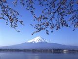 Cherry Blossom with Mount Fuji and Lake Kawaguchi in Background, Fuji-Hakone-Izu National Park, Jap Photographic Print by Dallas and John Heaton