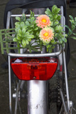 Bicycle with Flowers Fotografie-Druck von Guido Cozzi
