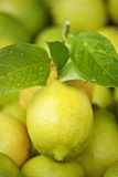 Fresh Lemons Photographic Print by Martin Harvey