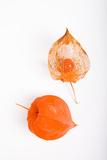 Orange Chinese Lantern Plant Fotografisk trykk av Frank Lukasseck
