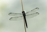 Dragonfly Photographic Print by Gary Carter