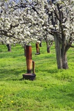 Cherry Orchards of the Oregon Columbia Gorge Fotografie-Druck von Terry Eggers