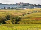 Autumn Vineyards in Full Color near Montepulciano Lámina fotográfica por Terry Eggers