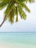 Palm Tree in the Maldives Photographic Print by John Harper