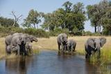Family of African Elephants Fotografie-Druck von Michele Westmorland